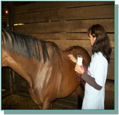 horsepic